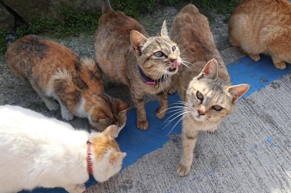 고양이 섬 아이노시마