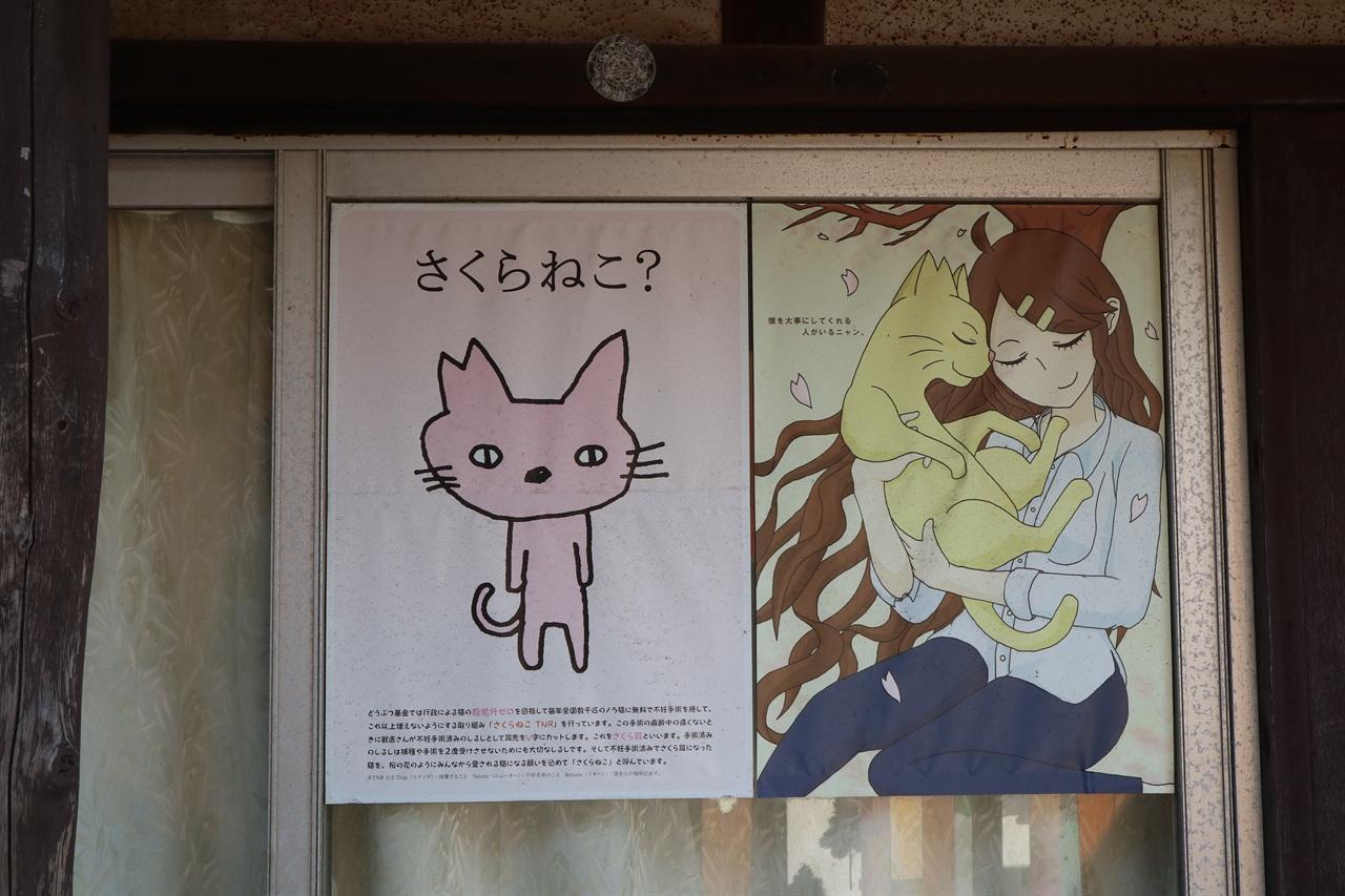 사쿠라 네코(벚꽃 고양이)의 의미를 설명하는 포스터