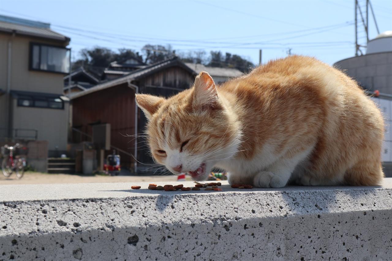 오기지마의 길고양이