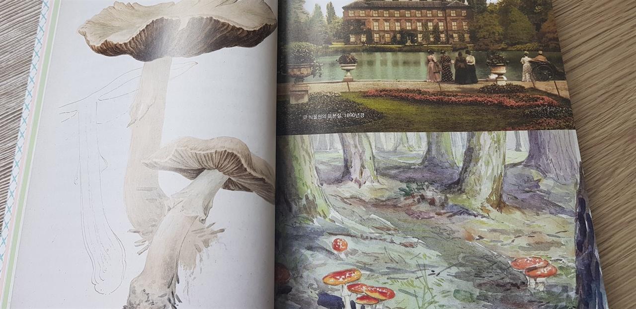 포터는 유난히 버섯류를 좋아해 그림으로 많이 그렸다