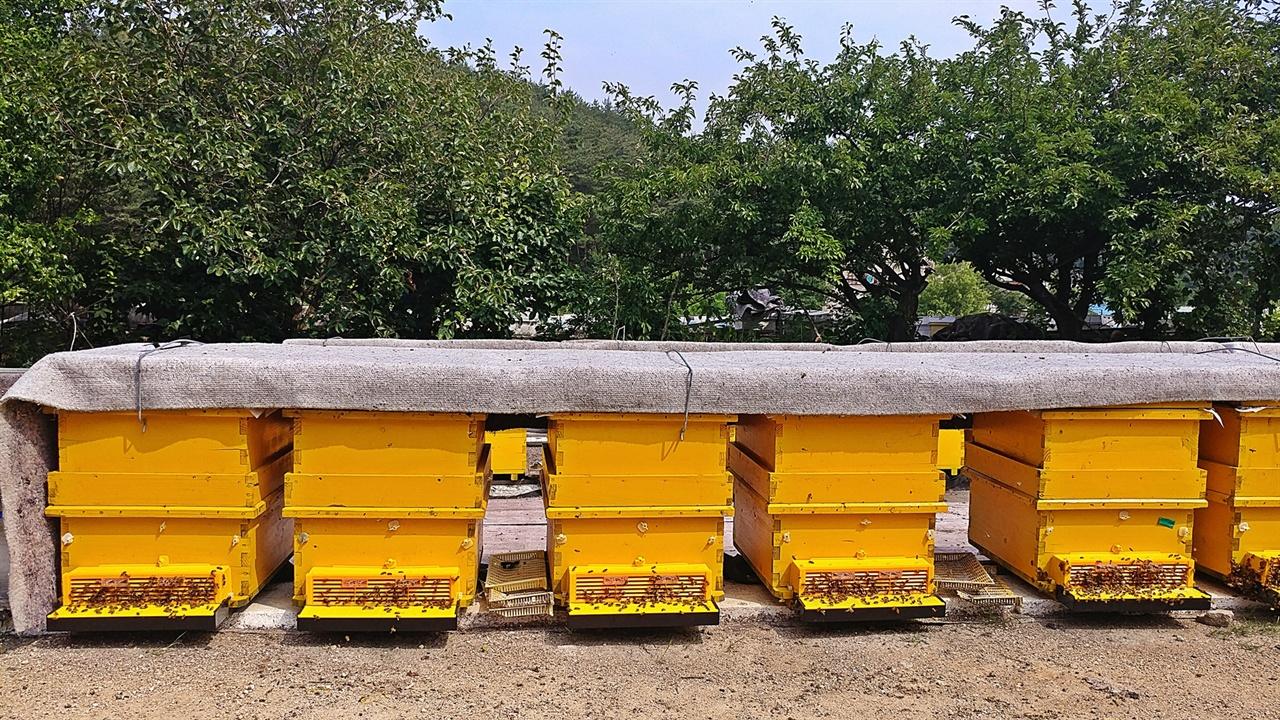 화분 채취용 꿀벌통 일부 모르는 이들이 화분을 벌똥으로 안다. 이처럼 특수하게 제작된 벌통을 설치해 벌이 꿀과 함께 꽃에서 모아온 꽃가루만 별도로 수집할 수 있다.