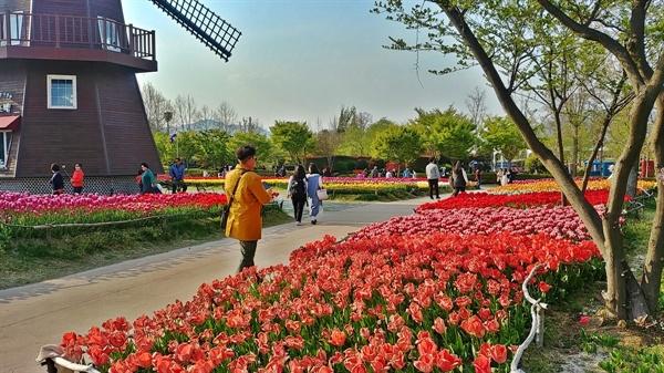 네덜란드 정원에는 형형색색의 아름다운  튤립 꽃이 만발했다.