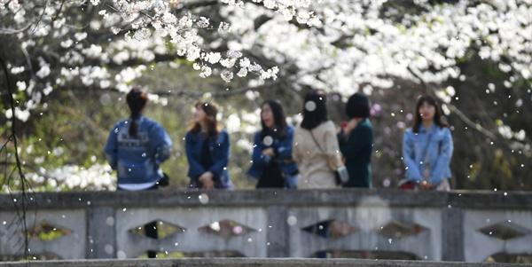 거창 덕천서원의 벚꽃.