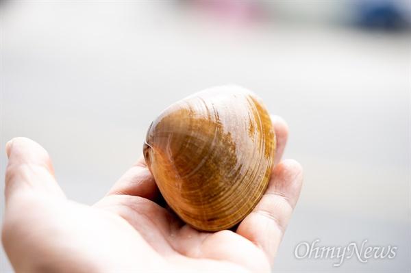 명주조개의 살은 전복과 바지락의 장점만 모아 놓은 듯 쫄깃함과 부드러움이 있다. 명주 조갯살을 씹으면 진한 조개 향이 먼저 침샘을 자극하고 은은한 단맛이 미각 세포를 일깨운다.