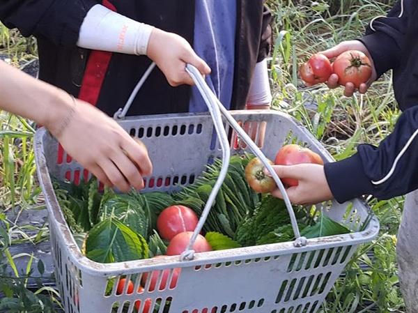 끝도 없이 쏟아져나오는 야채를 수확하다보면, 당연히 나눠먹고 당연히 장아찌를 담그게 된다