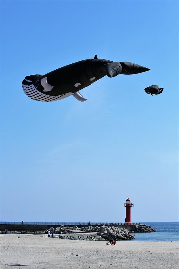 양양비치마켓 고래 연이 하늘에 두둥실 떠있다
