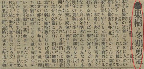 """전정 3 1917년 2월 14일치 <부산일보> 기사 """"'과수의 동절기 전정"""" 갈무리"""