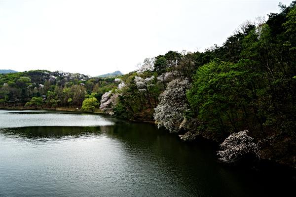 청계저수지 수변에 핀 꽃들