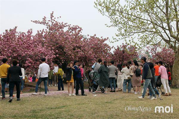 경주 불국사 겹벚꽃 주요 사진포인트에 인생 사진을 찍기 위해 줄을 서서 순서를 기다리는 모습