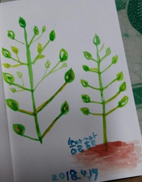 나뭇잎 몇장 1년전에 2시간동안 그린 나의 첫그림이다.