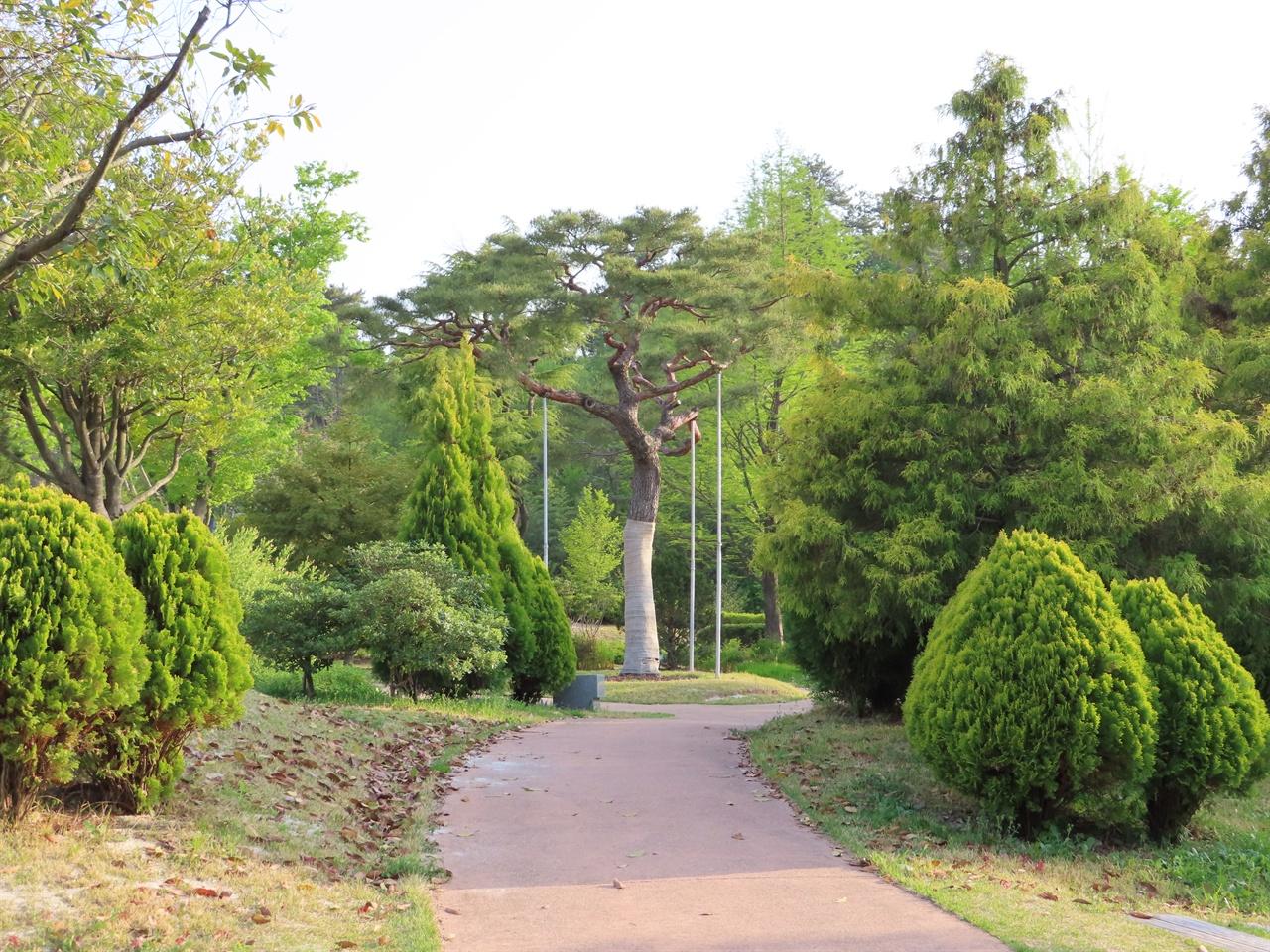 """지구정원 1번 소나무 중앙에 보이는 소나무가 정원박람회 조성 중에 첫 번째로 옮겨 심은 나무인 """"지구정원 1번 소나무""""이다. 헬기로 들어 올리려 해도 움직이지도 않던 소나무에게 막걸리를 바치고서야 옮길 수 있었다고 한다."""