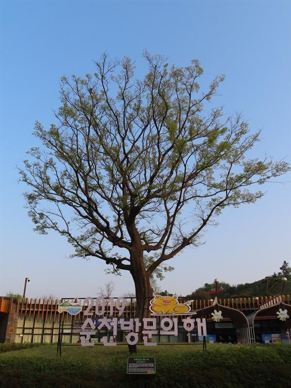 위풍당당 팽나무 풍덩독 배수펌프장 옆 공원 조성 때 벌목될 운명이던 60년 된 팽나무는 국내에 두 대 뿐인 8NC 굴삭기를 이용해 정원으로 옮겨져, 그 위풍당당한 모습을 고스란히 살릴 수 있었다.