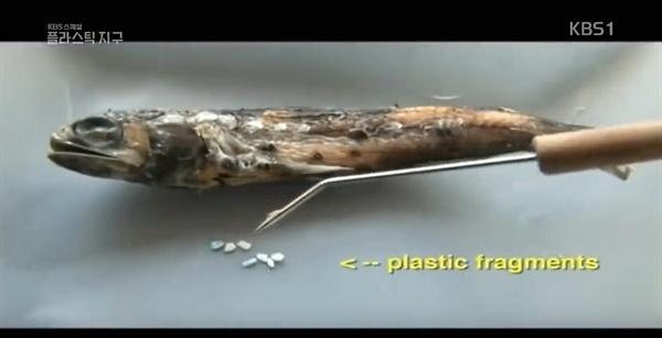 2018년 7월 5일 방영된 KBS 스페셜 <플라스틱 지구> 1부 - '플라스틱의 역습'편 중 한 장면