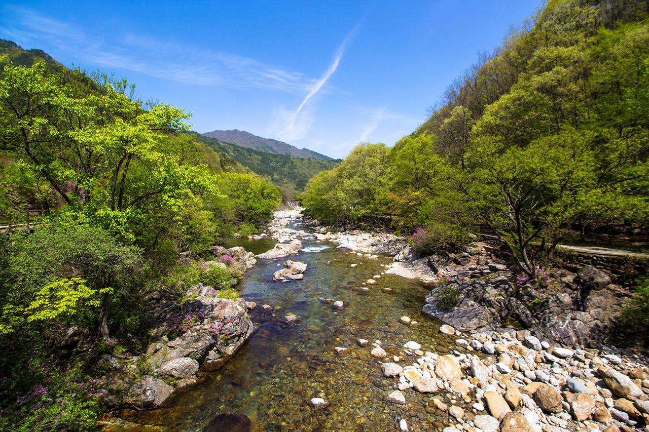 지리산 뱀사골 계곡에 핀 수달래 봄철 계곡은 맨몸으로 물길을 받아 낸 너럭바위가 지천이다. 그 사이로 빨간 수달래가 수줍게 피어 색을 더한다.