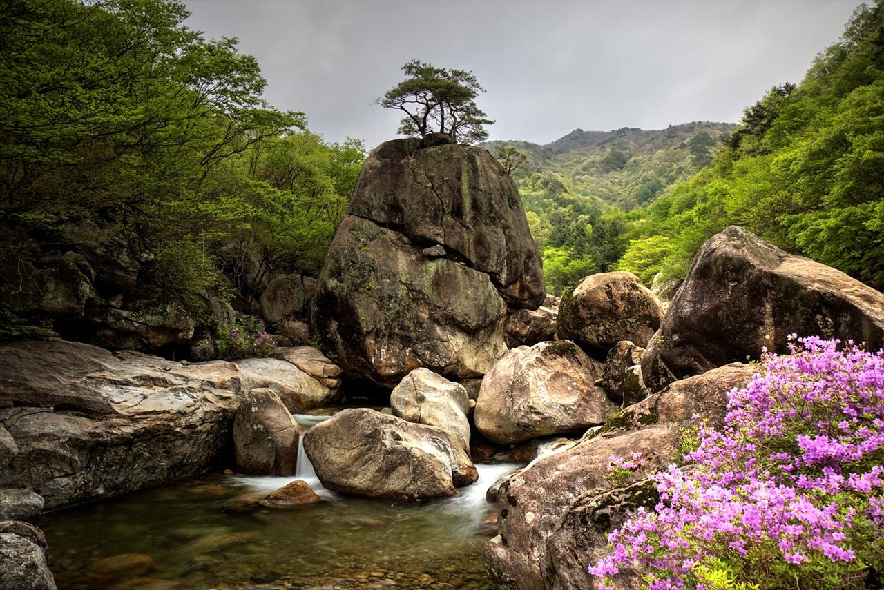 하동 의신계곡의 서산대사 명상바위 의신계곡의 서산대사 명상바위 주변에 수달래가 피면, 사진작가들이 모여 든다. 그들이 선호하는 사진 포인트라 해도 과언이 아니다.