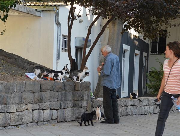 고양이 먹이 주는 할아버지. 고양이들이 싸우지 않고 차분히 먹이를 받아 먹고 있다.
