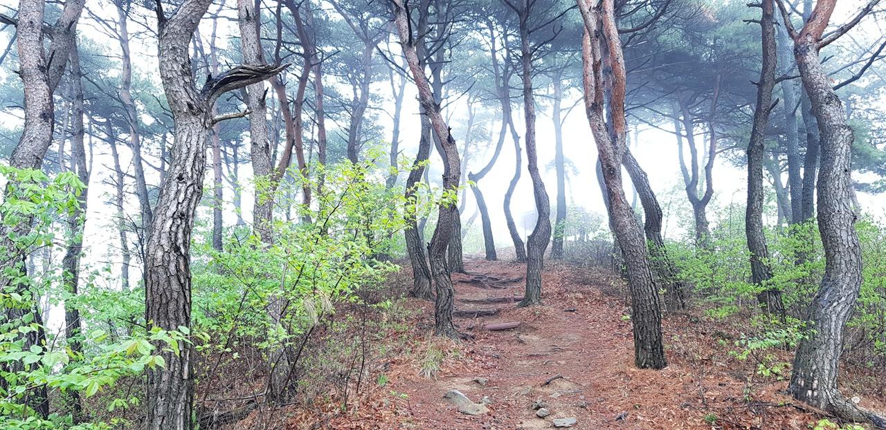 팔각정   주 등산로를 따라 올라가면 정자가 있고 그 안에 나발봉 417m라는 나무 푯말이 세워져 있다. 사람들이 이를 보고 나발봉으로 생각한다.