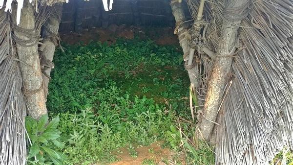 여수선사유적공원 내에 설치된 움집에는 잡초만이 무성하다.