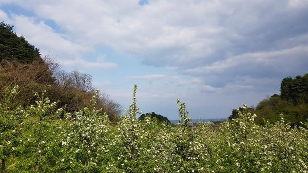 농장전경 바다가 내려다보이는 사과농장