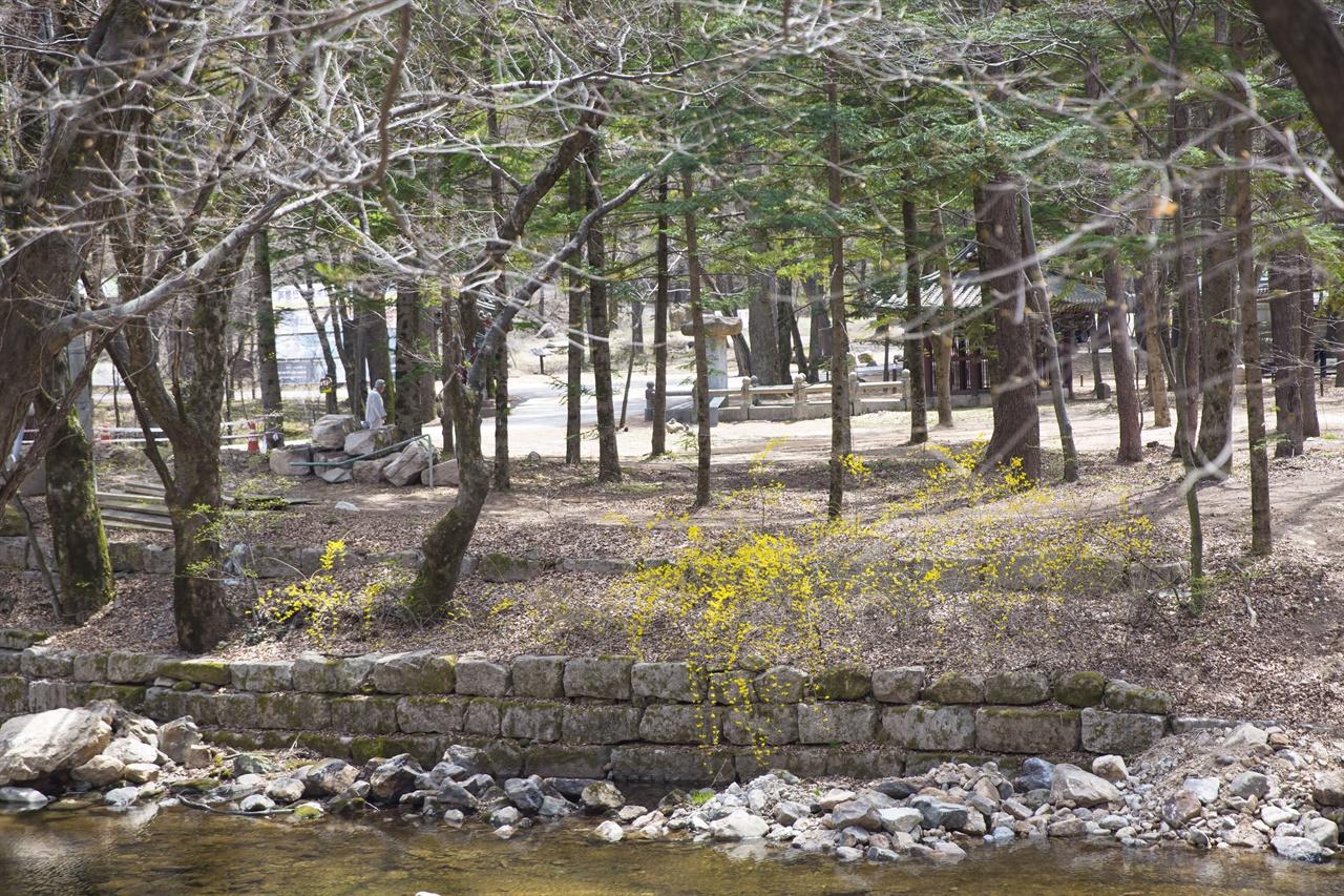 법주사 봄 풍경  온갖 나무와 꽃들이 어우러진 법주사 오리숲길은 최고의 길이다.