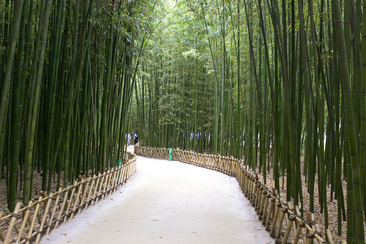 울산의 대표 힐링 명소 중 하나인 십리대숲의 모습.