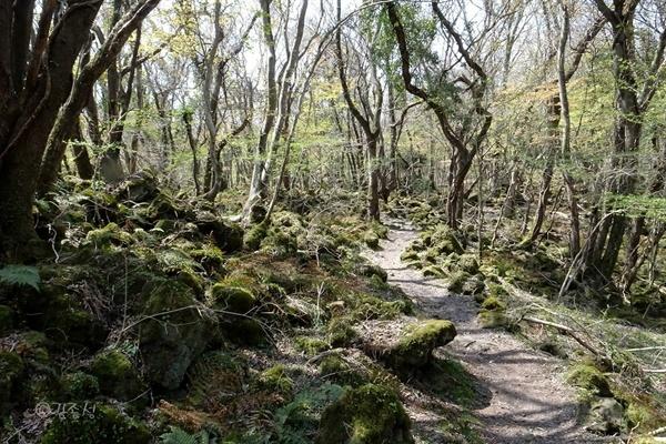 교래자연휴양림내 곶자왈 숲.