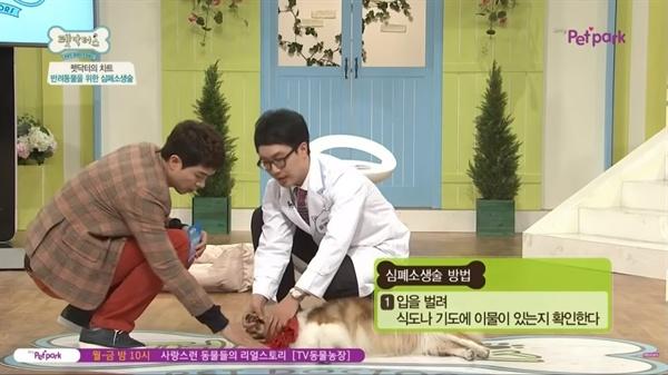 반려동물 심폐소생술 방법을 알려주는 유튜브 영상 갈무리
