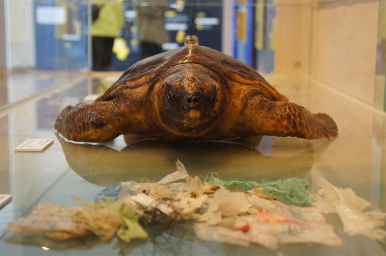 바다거북이와 소화기관에서 나온 플라스틱쓰레기