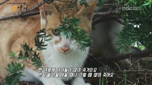 < MBC 스페셜 > '고냥이' 편의 한 장면