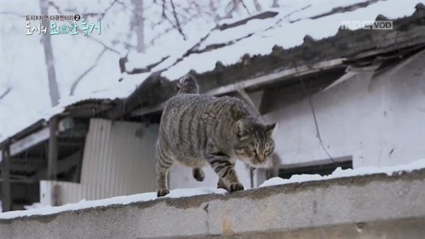 < MBC 스페셜 > '묘한 동거' 편의 한 장면