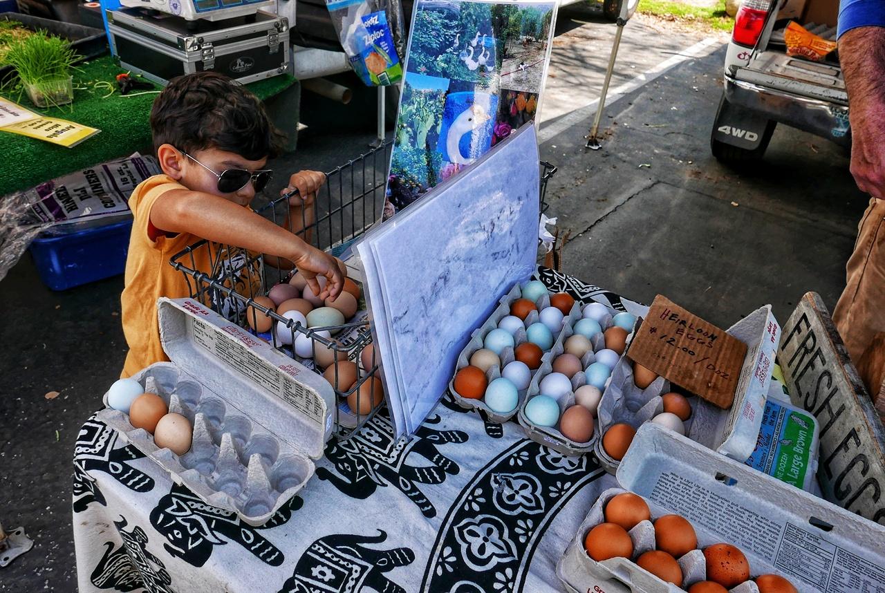 선글라스를 낀 아이가 직접 유기농 계란을 고르고 있다. 색깔과 크기가 다르다.