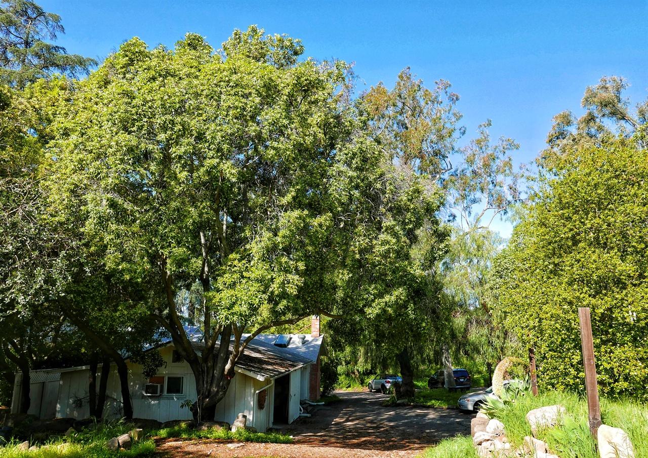 영성가 크리슈나무르티가 살았던 집을 개조한 페퍼트리 리트릿. 왼쪽 큰 나무가 페퍼트리다.