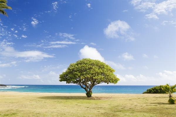그는 카페를 한 그루의 나무로 비유했다. 세찬 폭풍우에도 굳건한 나무는 땅에 단단하게 뿌리를 내리고, 튼실한 줄기를 만들며, 아래쪽에서 위를 향해 균형 있게 가지와 잎이 뻗어나가야만 한다고 강조했다.