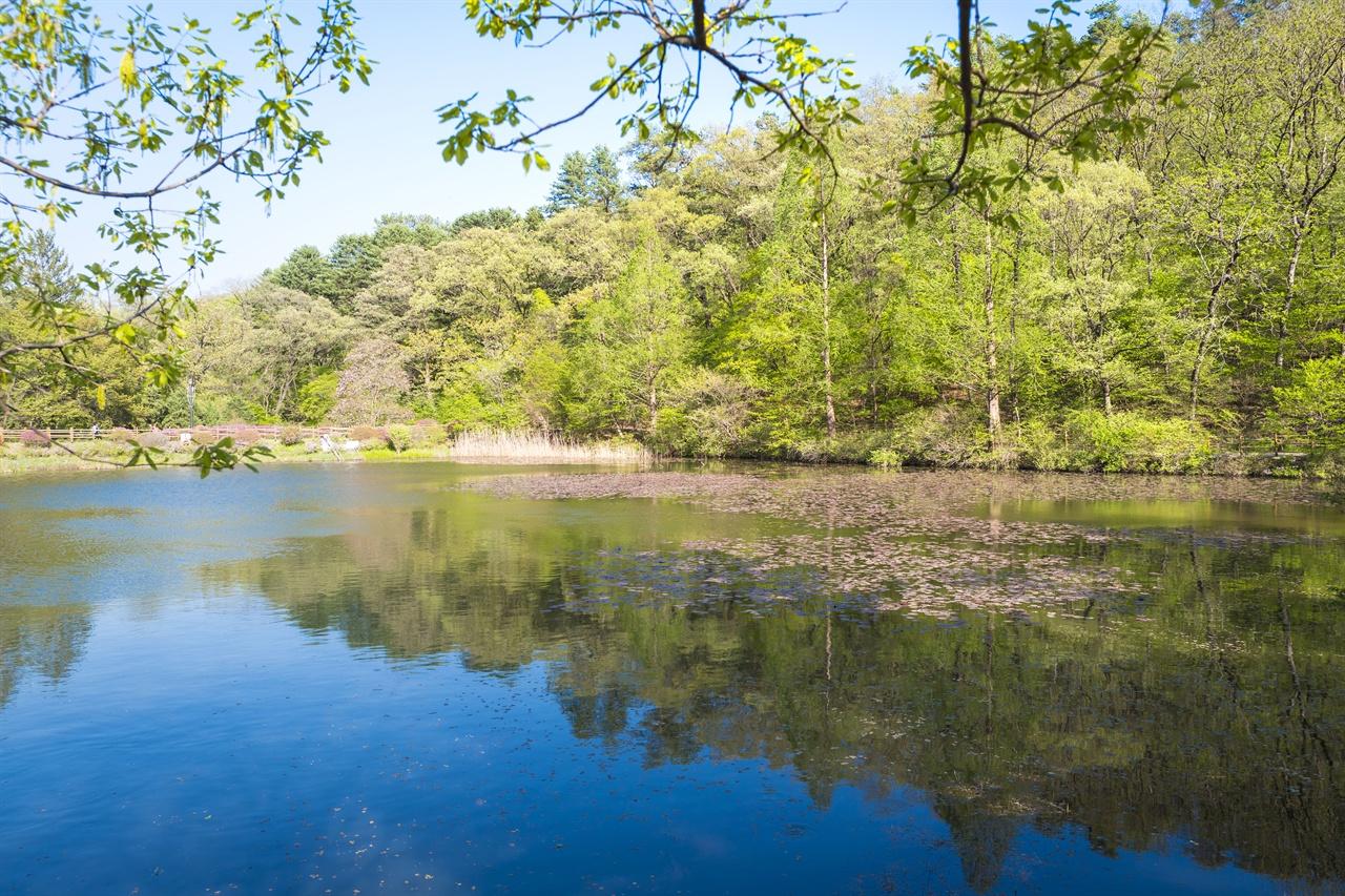 국립수목원 내 육림호 풍경