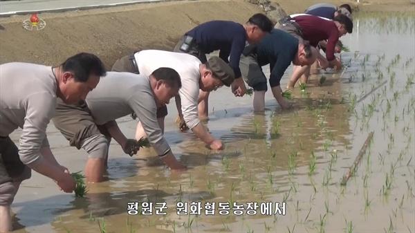 모내기 나선 북한 농민들 북한 평원군 원화리 농장에서 올해 첫 모내기가 시작됐다고 조선중앙TV가 11일 보도했다. 사진은 중앙TV가 공개한 원화농장 모내기 모습.