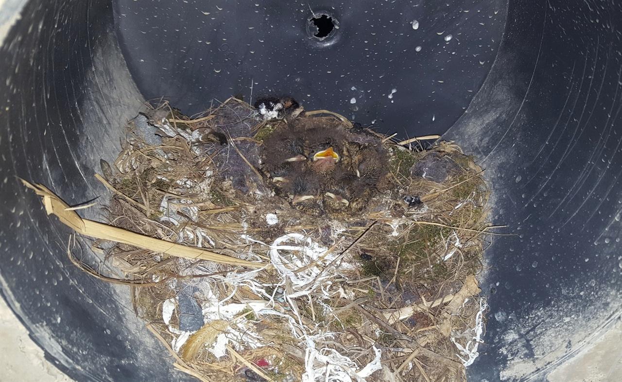 번식한 딱새새끼들의 모습