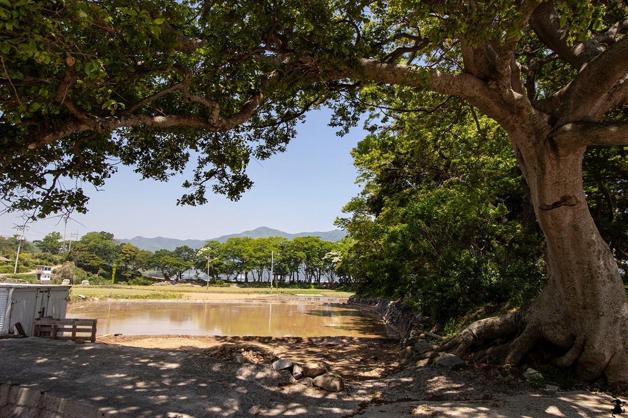 홍현 해라우지 마을을 방풍림 다랭이마을에서 홍현 해라우지 마을까지의 3.5㎞ 구간은 약간 난코스로, 천연 방풍림 숙호숲이 만들어 준 시원한 그늘을 한숨 돌리게 한다.