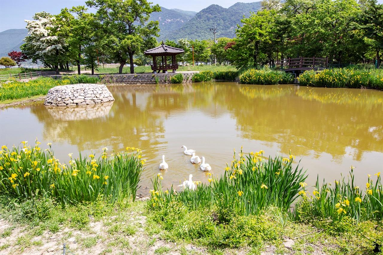 바래길탐방안내센터의 인공연못 노오란 창포가 꽃핀 연못에서 거위들이 한가롭게 헤엄치는 모습을 끝으로 남해바래길을 마무리했다.