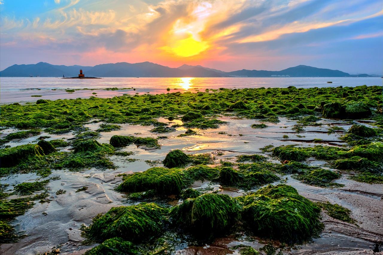 남해의 노을과 해초 녹색의 대조 노을빛이 바다를 물들일 때쯤, 해안가 돌에 붙은 해초의 녹색이 선명해진다.