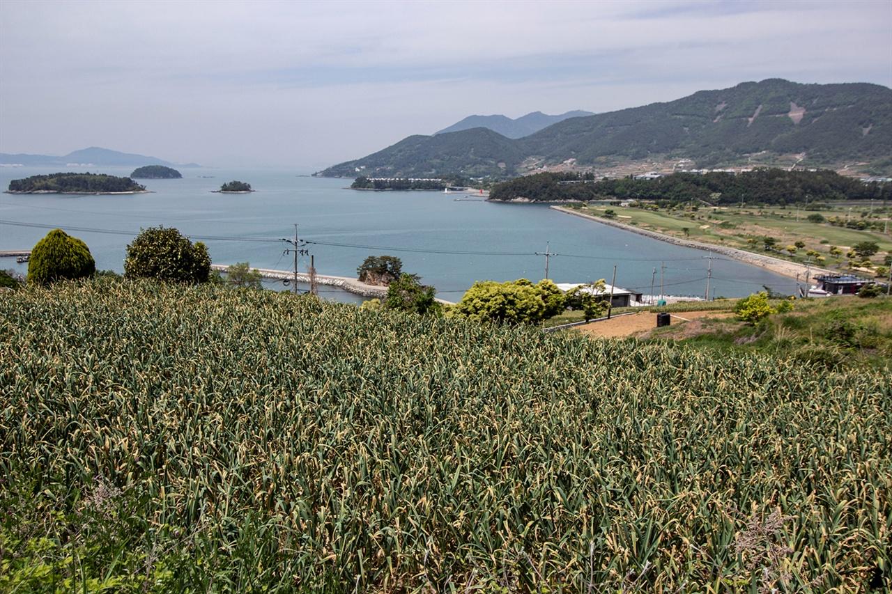 남해의 마늘밭 남해의 효자 작물인 마늘이 익어가고 있다. 황톳빛 농토와 끝이 누렇게 된 초록빛 마늘잎이 바다빛에 반짝거린다.