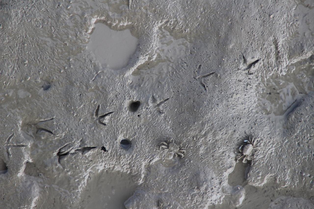 증도 갯벌은 유네스코 생물권 보전지역이자 람사르 습지로도 지정되었다.