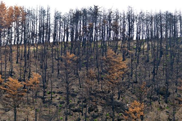 불에 탄 나무들