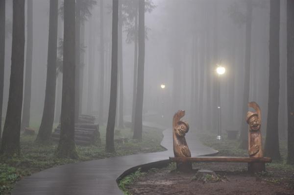 이른 아침 휴양림 숲길.