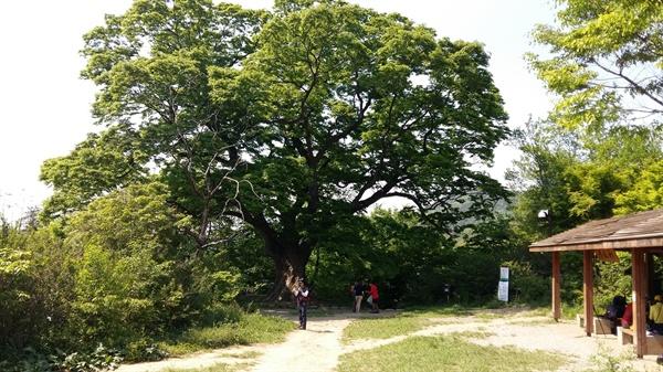 당산나무 쉼터는 노무현 대통령이 시민들과 만나 담소를 나누며 쉰 곳이다. 당산나무는 수령 450년이 넘었다