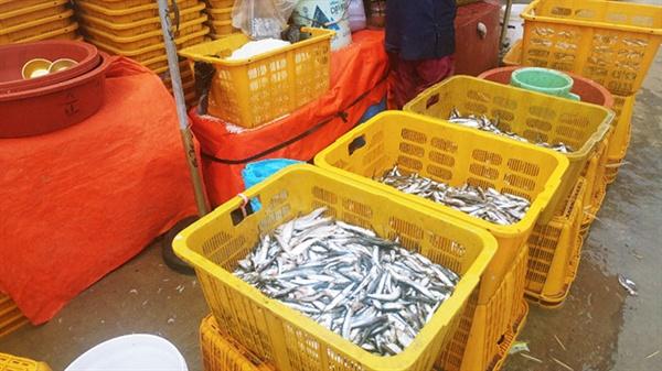 이날 소래포구 생선 가운데 대멸치가 눈길을 사로잡았다.