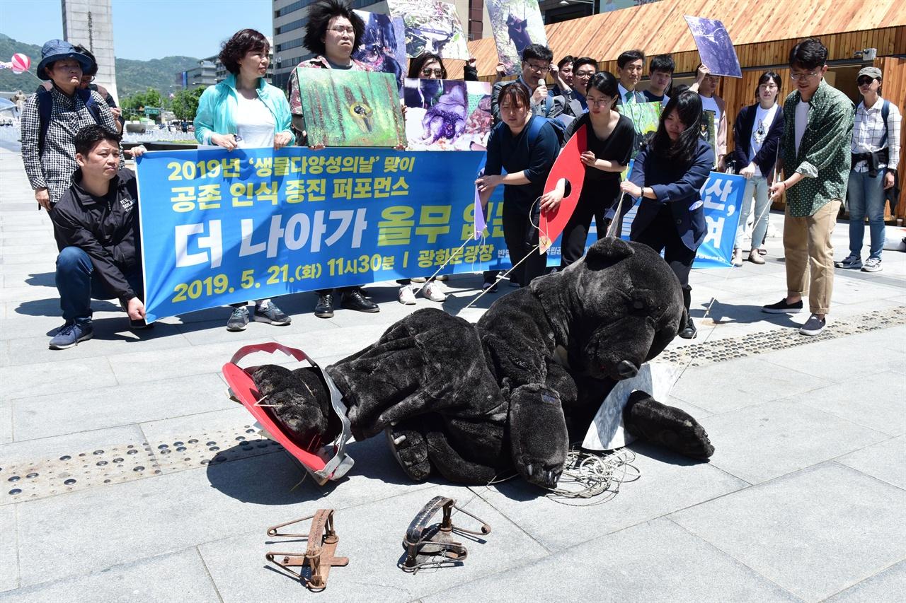 덫에 걸려 움직일수 없는 반달곰 국립공원을지키는시민의모임, 녹색연합, 반달곰친구들 등 6개 환경운동단체 회원들이 21일 오전 서울 종로구 광화문광장에서 대형 덫에 걸려 고통스러워 하는 반달곰을 표현하는 퍼포먼스를 진행하고 있다. 2019.05.21
