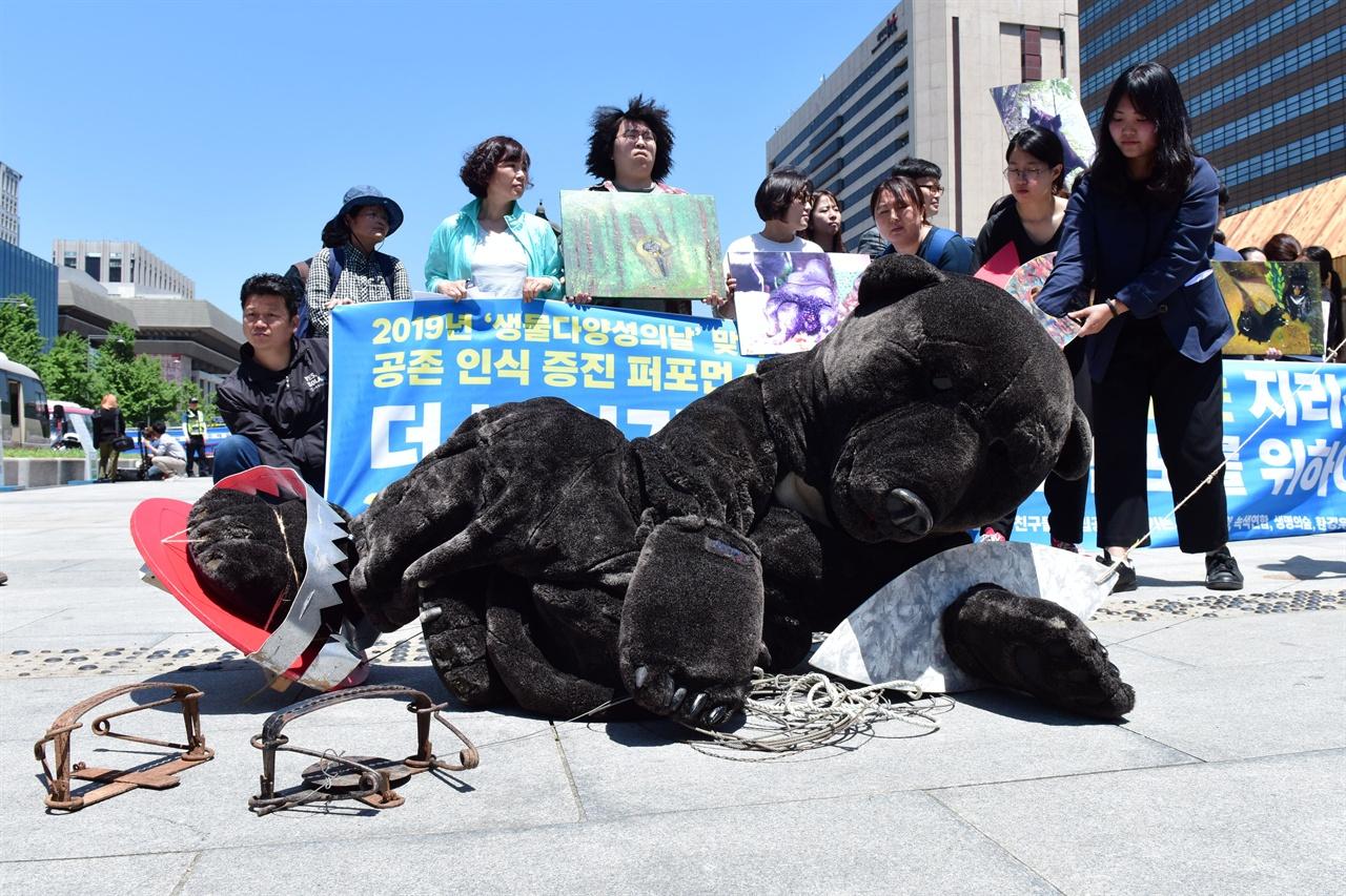 덫에 걸려 쓰러진 반달곰 국립공원을지키는시민의모임, 녹색연합, 반달곰친구들 등 6개 환경운동단체 회원들이 21일 오전 서울 종로구 광화문광장에서 대형 덫에 걸려 고통스러워 하는 반달곰을 표현하는 퍼포먼스를 진행하고 있다. 2019.05.21