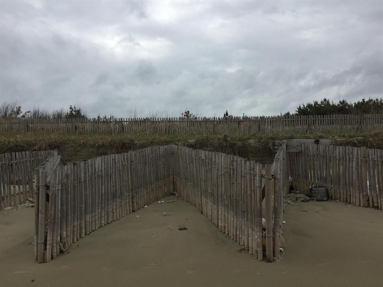 모래가 쓸려내려가지 않도록 세워놓았어요! 명사십리 해수욕장의 모래를 보호하기 위해 세워놓은 대나무 담이예요. 거친 파도가 모래를 쓸어가는 것을 조금이라도 막아보기 위한 마을 사람들의 지혜였겠죠? 이걸 보는 순간 울컥했어요.