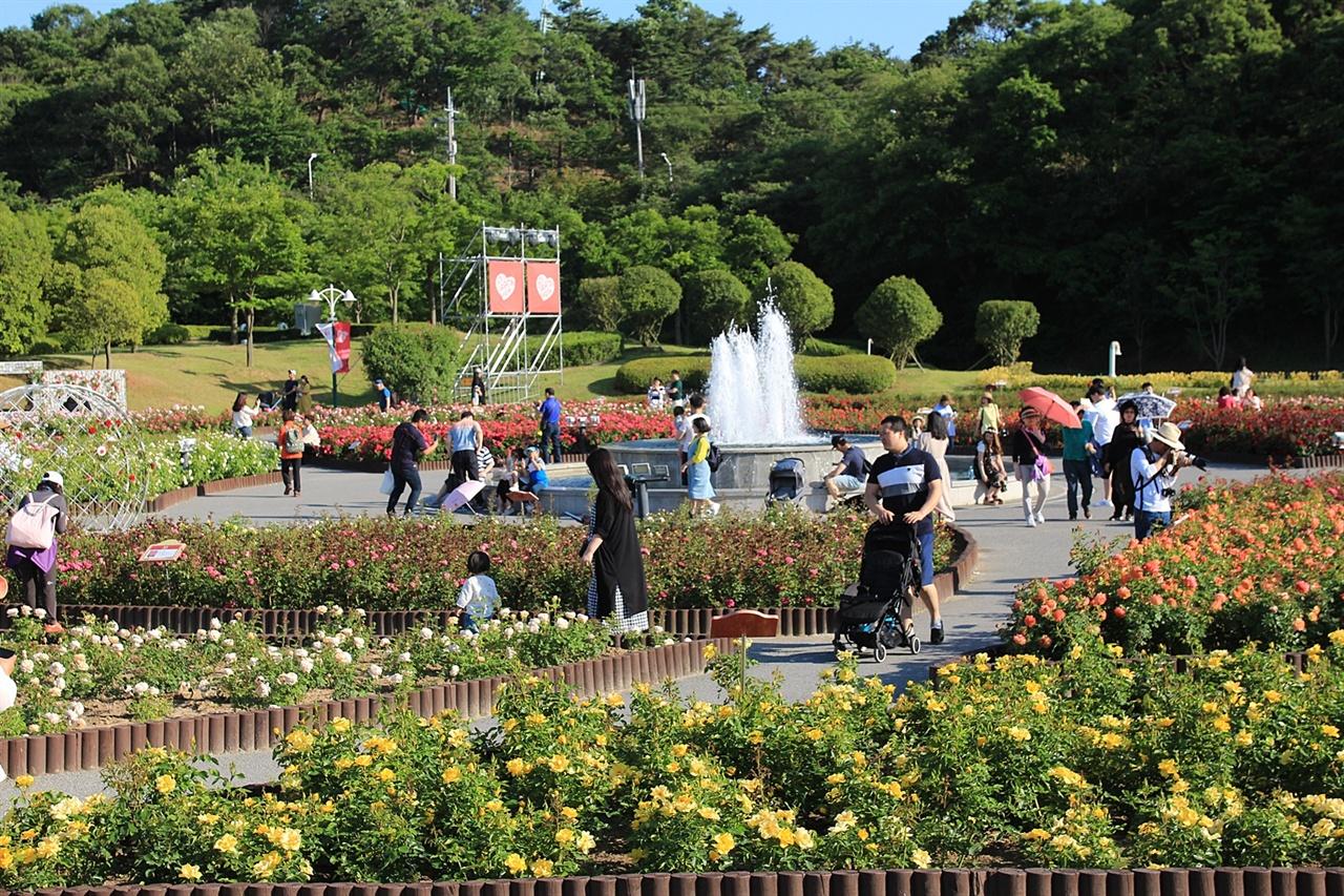 울산대공원 장미원에서 열린 장미축제장 모습