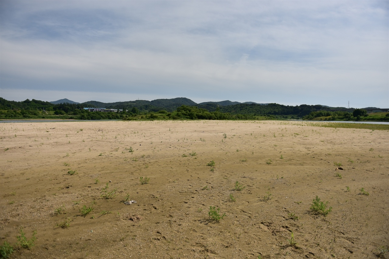 수문 개방 이후 세종보 하류에 형성된 모래섬